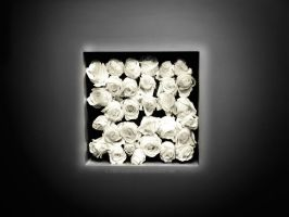 Think White Roses by DxButterfly