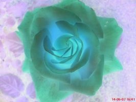 cosmic rose by flamex1991