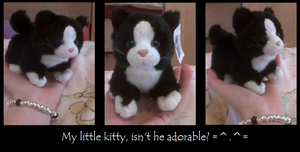 My little kitty soft toy. =^.^= by Horsey-Luver450
