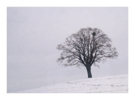 Snow and Fog by ameliasantos