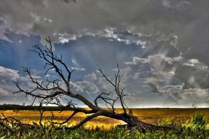 Tree and Sky in HDR by cstoddard