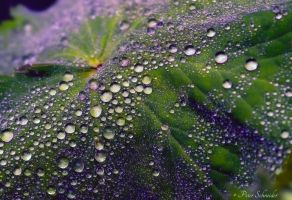 Drops. by Phototubby