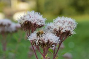 Bee eating in fall 2014 by A1Z2E3R
