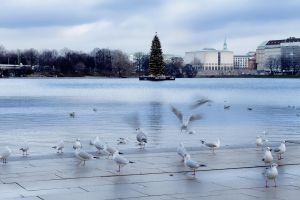 Water and Seagulls by steeph-k