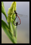 Dragon-fly Heart by webworm