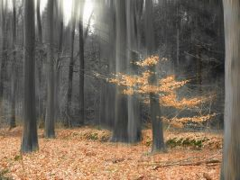 the last leafs by Hepiefull