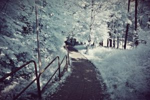 .The Path. by cichutko