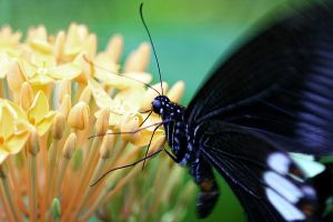 Butterfly Photo 8 by blookz