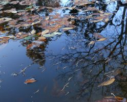 reflection and leafs 2 by florina23