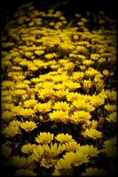 Yellow Flower Road by Eternal-Polaroid
