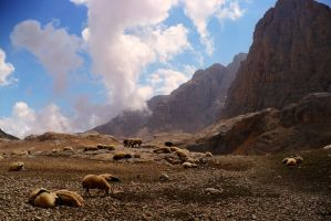 Mountain sheep by MirachRavaia