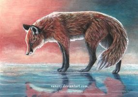 Red Reflection - Red Fox by Vanory