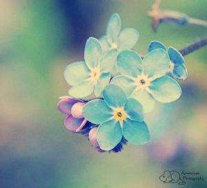 Small, Fragile and Blue by =Annimouse