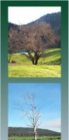 Stock Pack - Trees 2 by Gracies-Stock