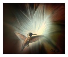 Dance of the Hummingbird by nine9nine9