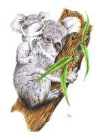 Koala Colored Pencils Study by PauloDuqueFrade