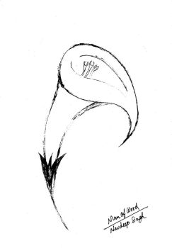 Tulip Black and White version by ManOfWord