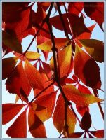 autumn leaves by Ingelore