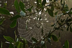 Cobwebs anew by wolfieblob