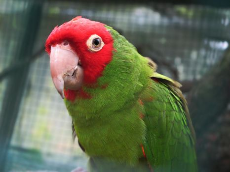 Beautiful Red And Green character. by DTCT