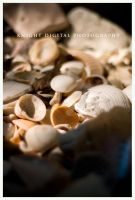 Shells by KnightDigital