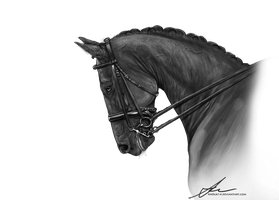 Grayscale Dressage PNG by Valanee
