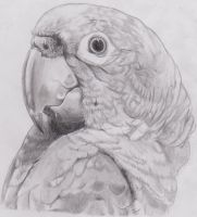 Parrot~ by Jessadraw