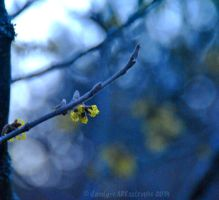 Shades Of February 08 by dandy-cARTastrophe