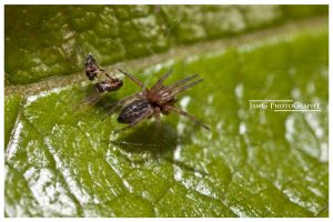 Spider Macro 1 by jawg1982