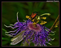 Japanese Passion by boron