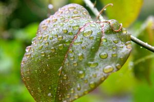 Rain Droplets by Justateen10