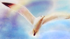 Fly to Heaven by allison731