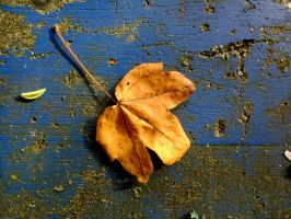 leaf on blue bench by Mittelfranke