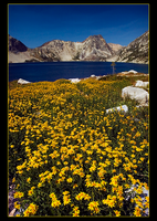 Sawtooth Lake Meadow by narmansk8