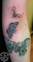 Moth Tattoos (Bottom one Healed) done by Sean by seanspoison