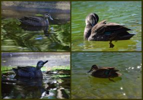 I Love Ducks by MayEbony