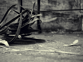 Fallen Things - A Note. by awfultosee