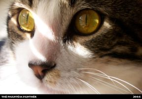 Syrus - Extreme Close-up by phantompanther