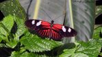 Butterfly Stock 3 by Moonstone-Designs