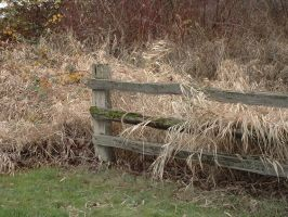 fence and tall grass 1 wide by JensStockCollection