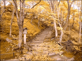 Japanese Fall Forest by Jay1pl