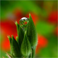 image in a drop by SvitakovaEva