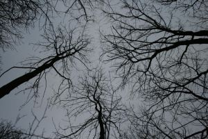 trees in the sky by LeandrasStock