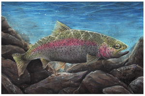 Rainbow Trout by MorRokko