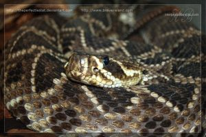 Rattler by theperfectlestat