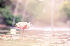 Waterlily by Lady-Tori