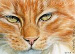 ACEO Ginger Tabby Cat by sschukina