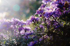 Flowers In The Sunlight II by MHalling