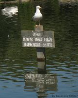 Seagull in the sign - edit by dazeredo