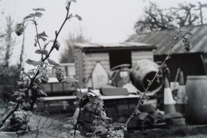 Plants and a Concrete Mixer by ellatimney